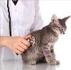 Ветеринарные клиники в Красноборске